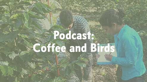 Feature image of Fabiola Rodriguez conducting field research about birds on coffee farms in Honduras.