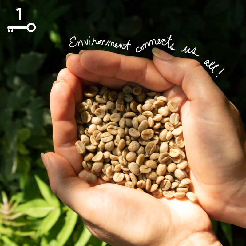 "Green coffee beans in the palm of a hand; this is raw coffee before it is roasted, and the text overlay reads, ""Environment connects us all!"""