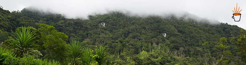 Image of the natural cloud forest that exists throughout the Yoro region of Honduras