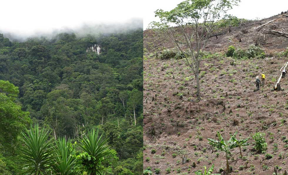 Two high elevation mountainsides of Honduras's coffee-producing region showing the vast difference between a lush, natural forest and a recently deforested hillside.