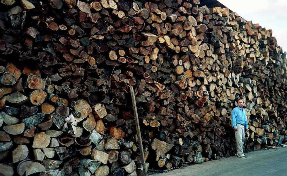 A large woodpile (towering over a person's head) that represents just a small fraction of the forest wood that is used to cut and dry coffee.